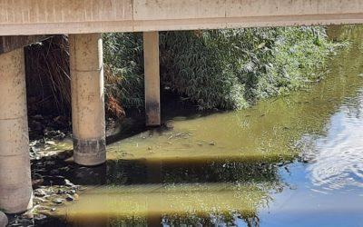 El PP de Alcalá exigirá responsabilidades al Gobierno de Ana Isabel Jiménez tras la aparición, otra vez, de cientos de peces muertos en el Guadaíra
